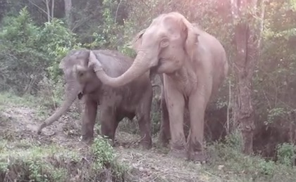 Elephant reunites with its mother, we cry a million tears