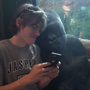 A gorilla is obsessed with this guy's phone pics, and it's too adorable