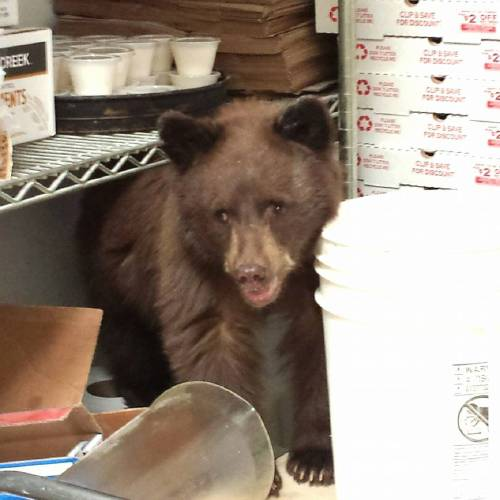 Bear just wants some pizza. We feel you, bear.