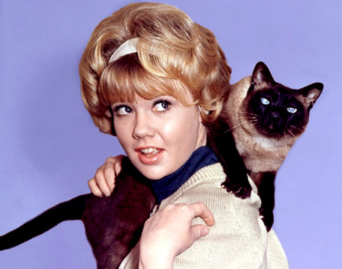 All the reasons you should totally date a cat person