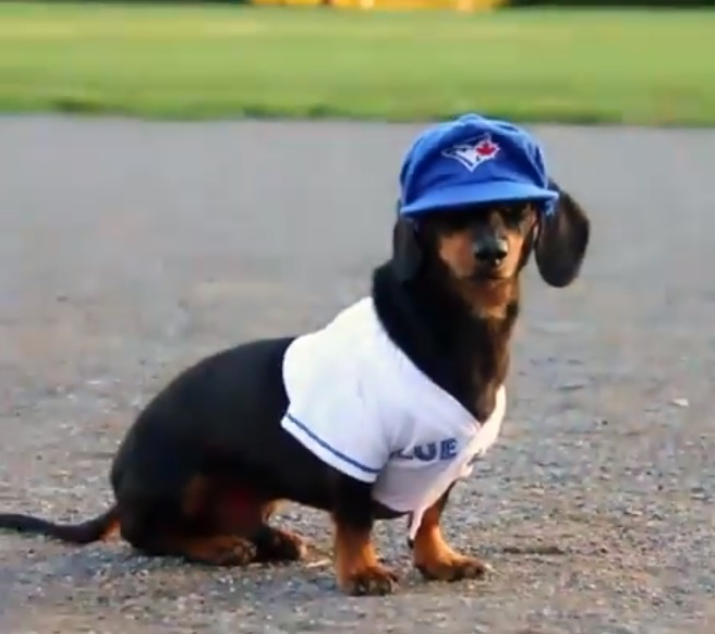 24 important seconds of dachshunds playing baseball