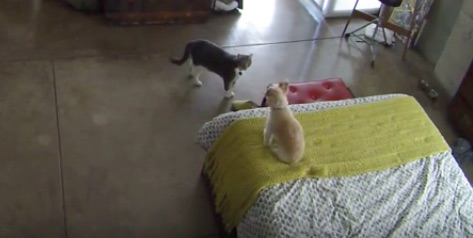 The newest dog whisperer on the scene is (wait for it) a cat