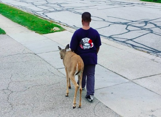 The beautiful way this little boy helped a blind deer makes us believe in goodness