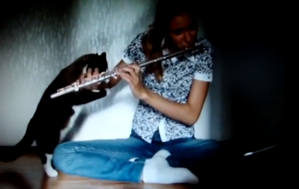 This cat is not a fan of the flute
