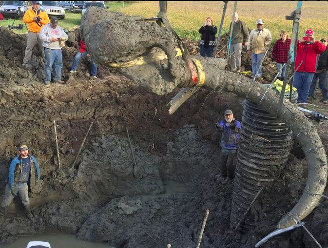 Soooo, this guy just found a woolly mammoth skeleton on his farm