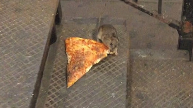 The pizza rat is now a Halloween costume, because of course it is