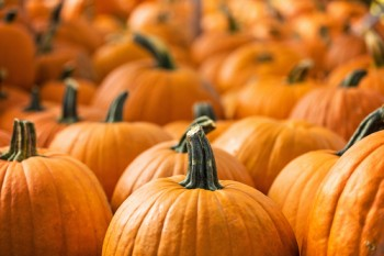 Not to freak you out, but we might run out of pumpkins for Thanksgiving