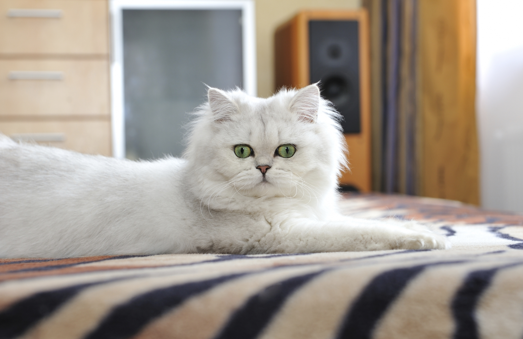 Research just confirmed your suspicions: Yes, your cat basically does rule your house