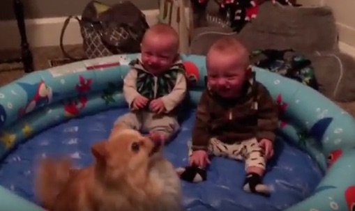 These twin babies who can't stop laughing at their Pomeranian are all of us