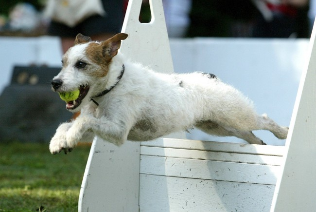 Meanwhile in Indiana, dogs are competing in a very serious fetch competition