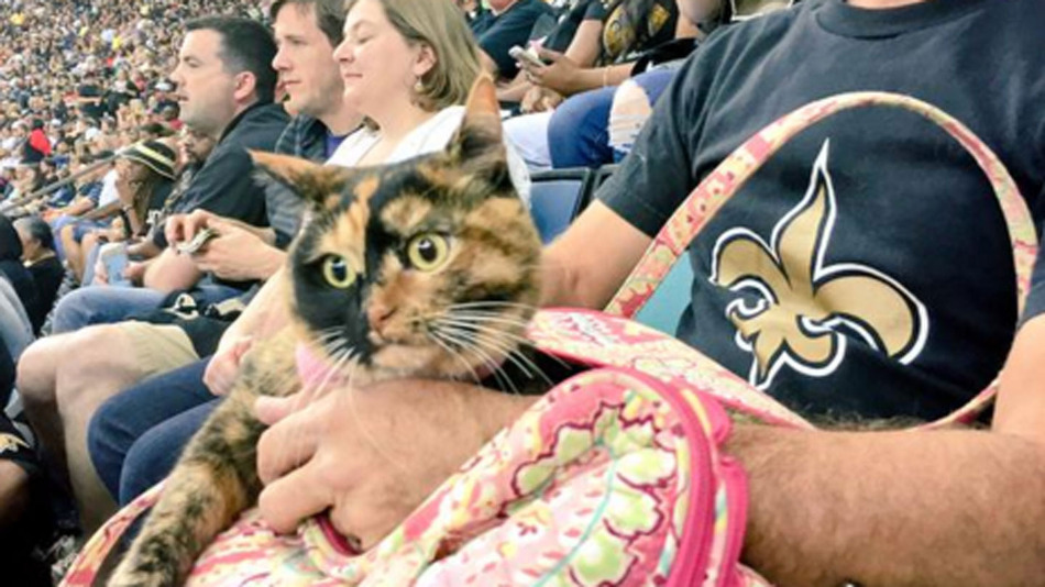 How this ordinary cat became a pro sports team's good luck charm