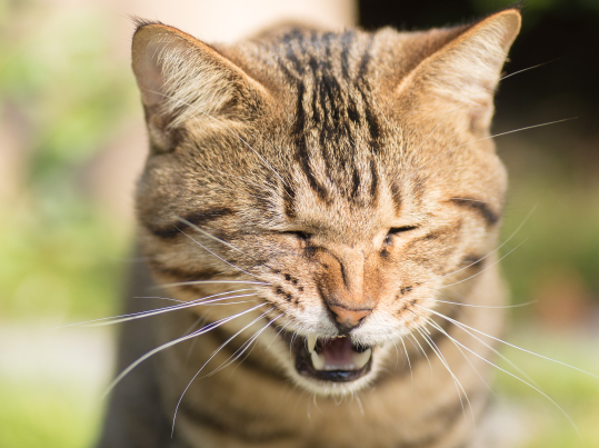The scariest cat sneeze that ever was