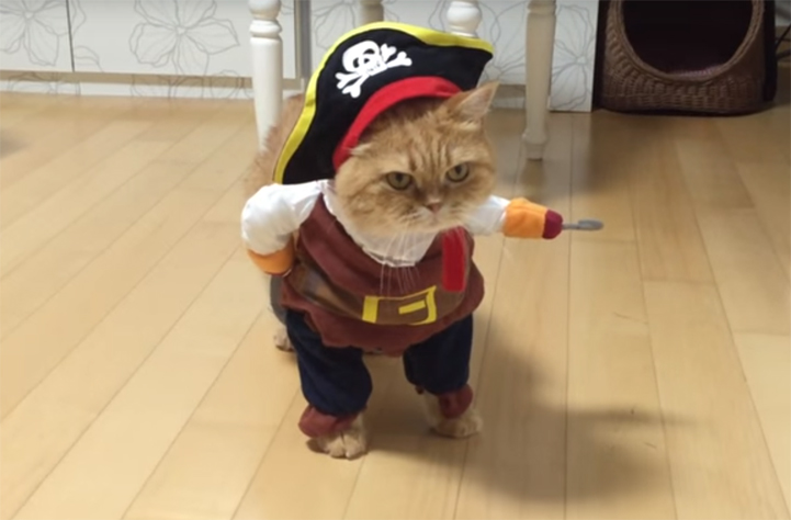 Watch this cat pull off the best pet Halloween costume ever