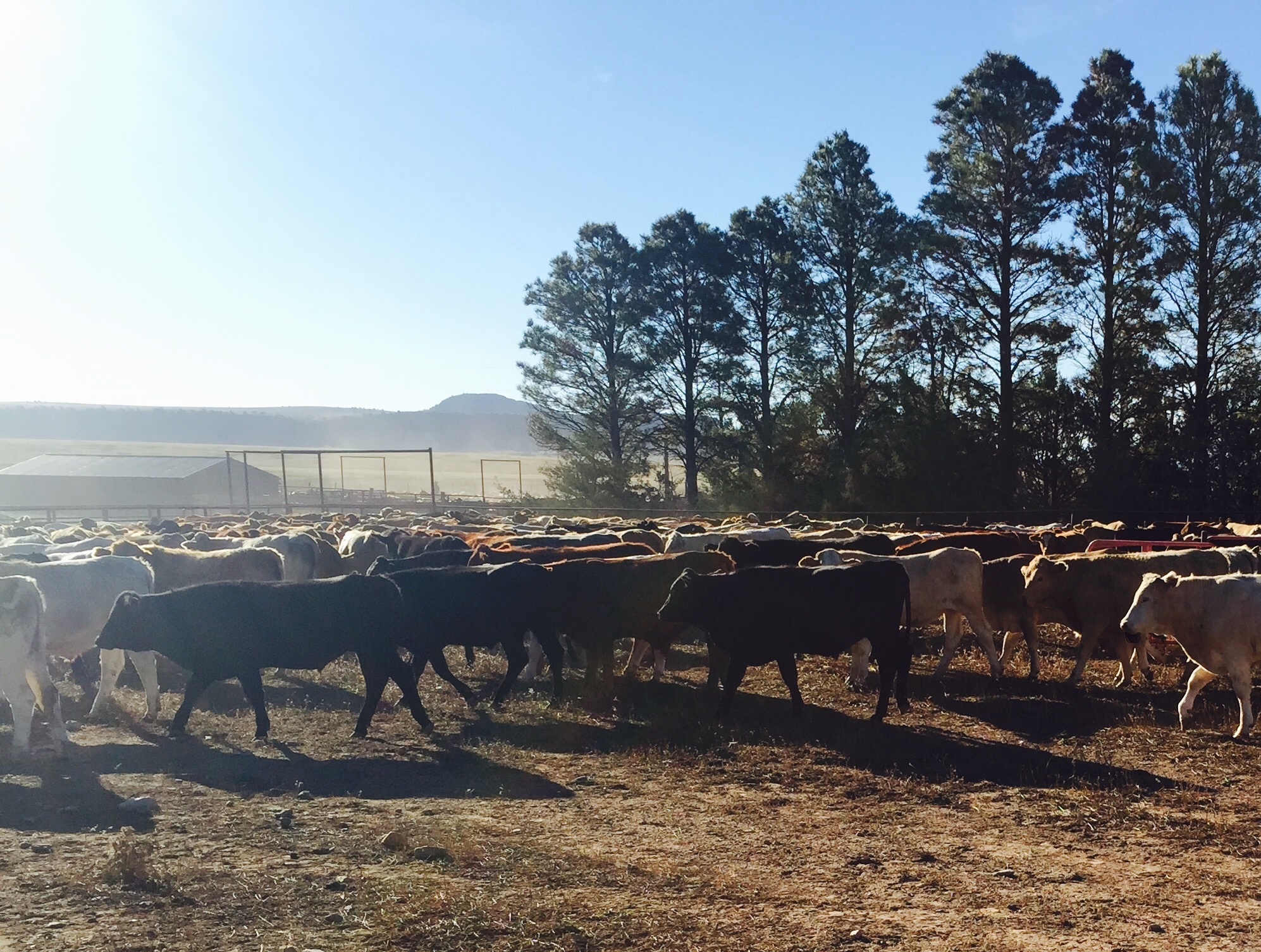 On my first year as 20-something cattle rancher
