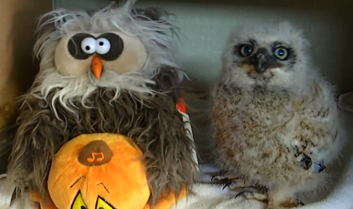 This owl can out-dance all of us