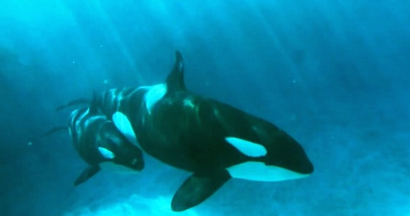 Another doc raises serious questions about SeaWorld