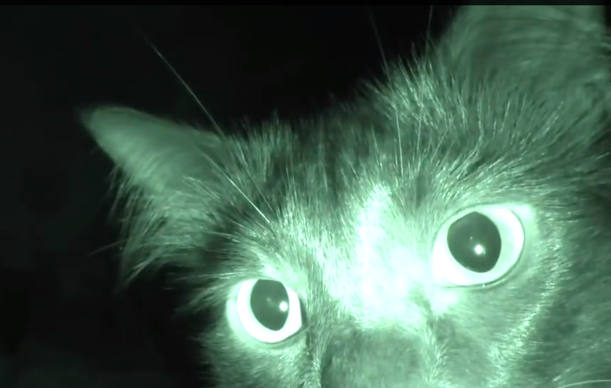 Proof that cats are basically like ghosts