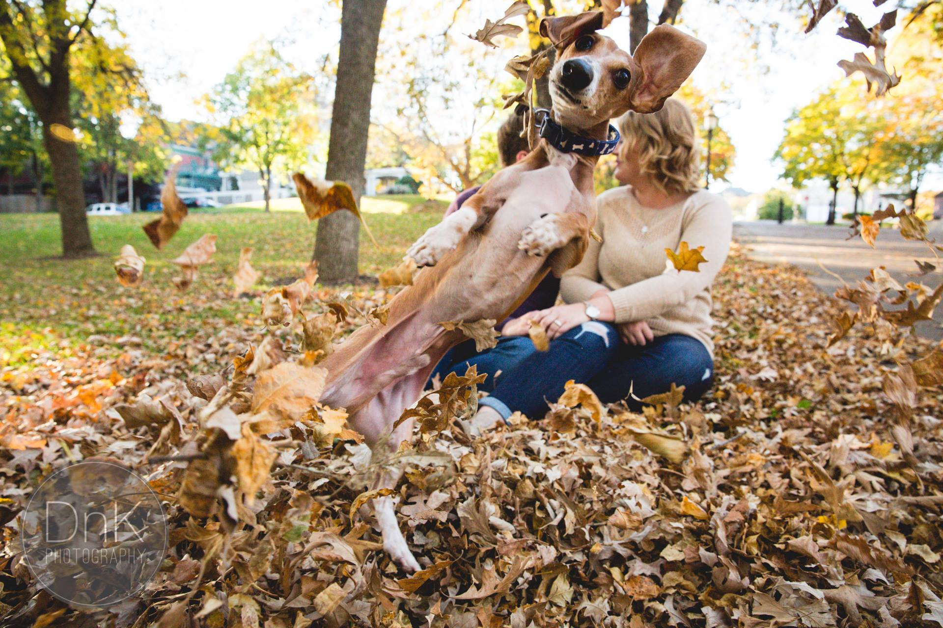 This dog photobombed his owner's engagement pix so hard