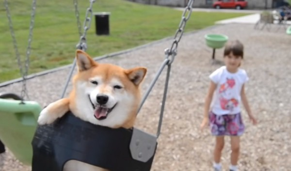 Phoenix and her dog Kitsu go to the playground. Hearts melt.