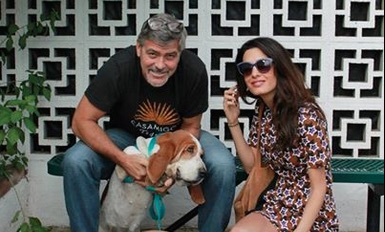 George and Amal's new shelter dog is crazy adorable