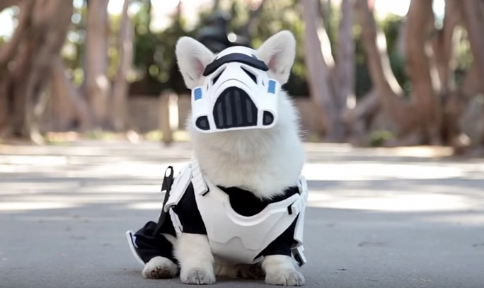 Here is a corgi dressed as a stormtrooper, because Monday
