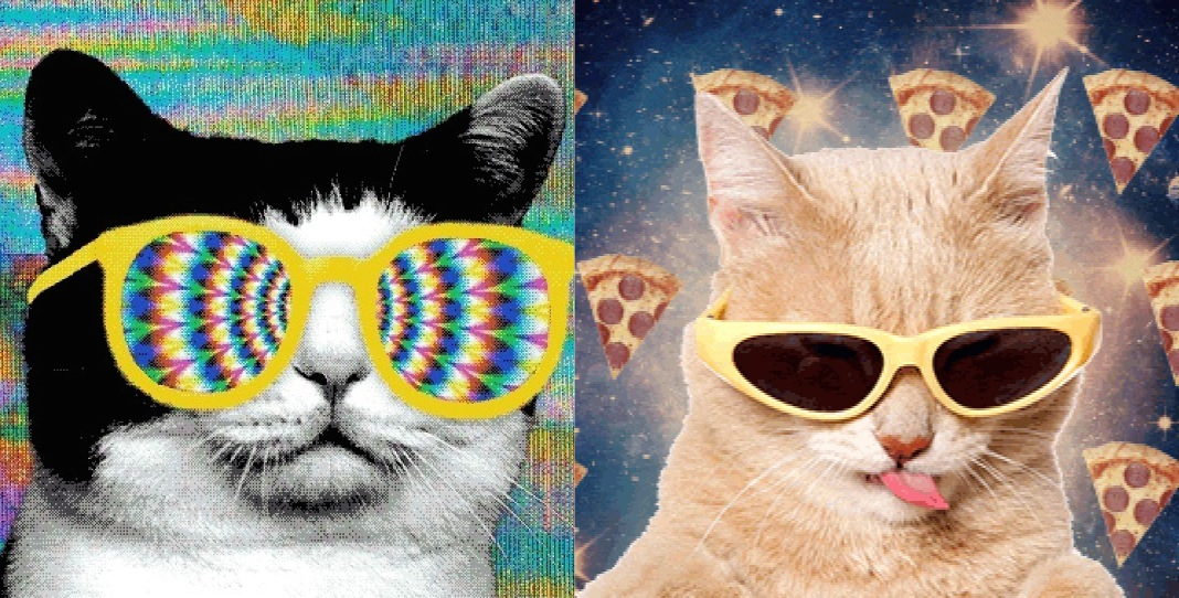 "The cat-meme filled music video ""All Meow Life"" features every Internet cat. Like ever."