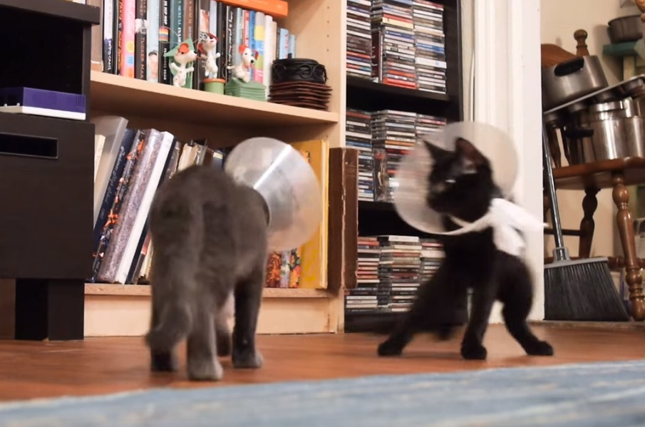 These kittens wearing cones are having the time of their lives