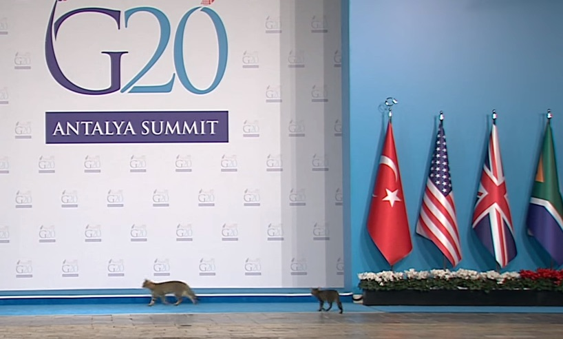 Group of stray cats crosses stage at mega important G20 Summit, NBD