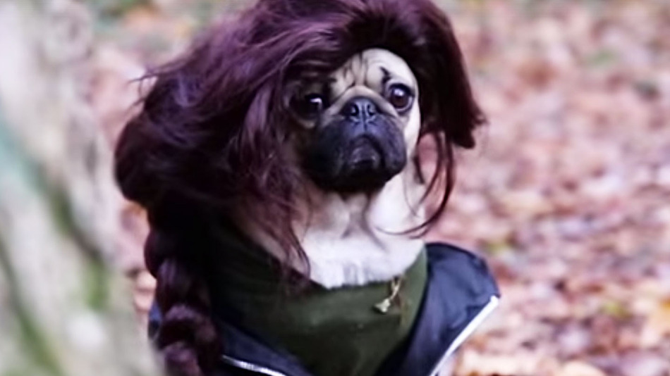 Doug the Pug stars in our fave new video, 'The Hungry Games'