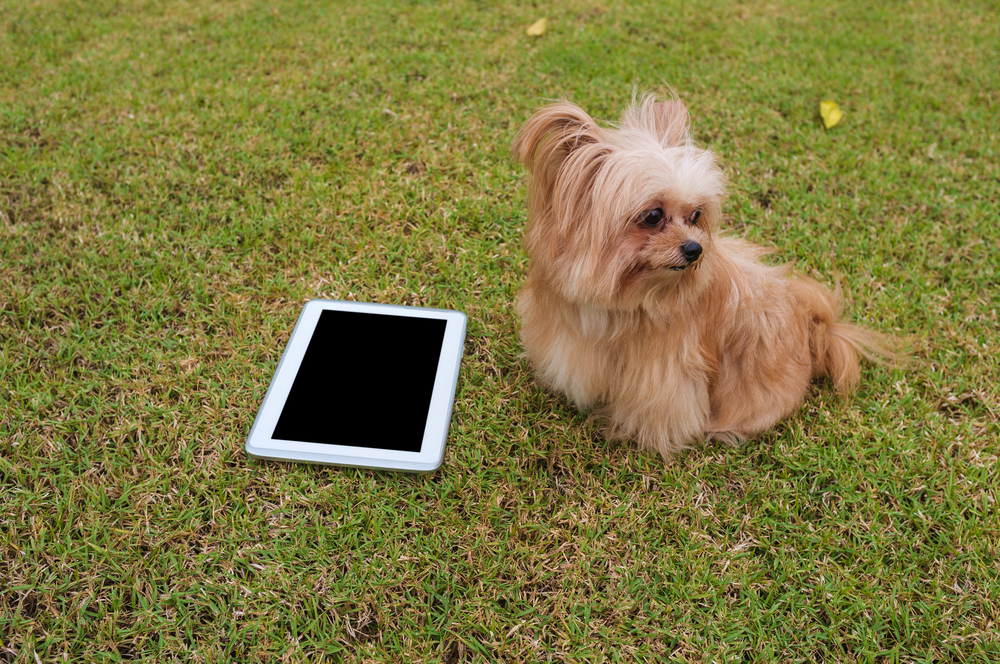 Here's why your dog treats you like a stranger on FaceTime