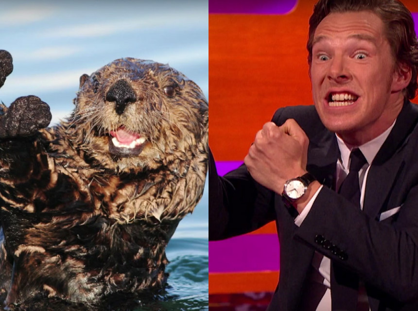 Benedict Cumberbatch imitates otters, gives the internet exactly what we want