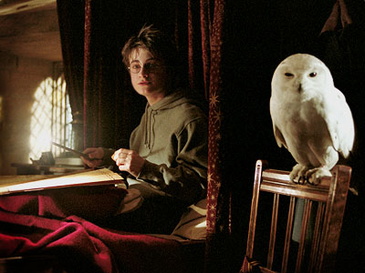One super sleuth 'Harry Potter' fan just worked out why Hedwig had to die