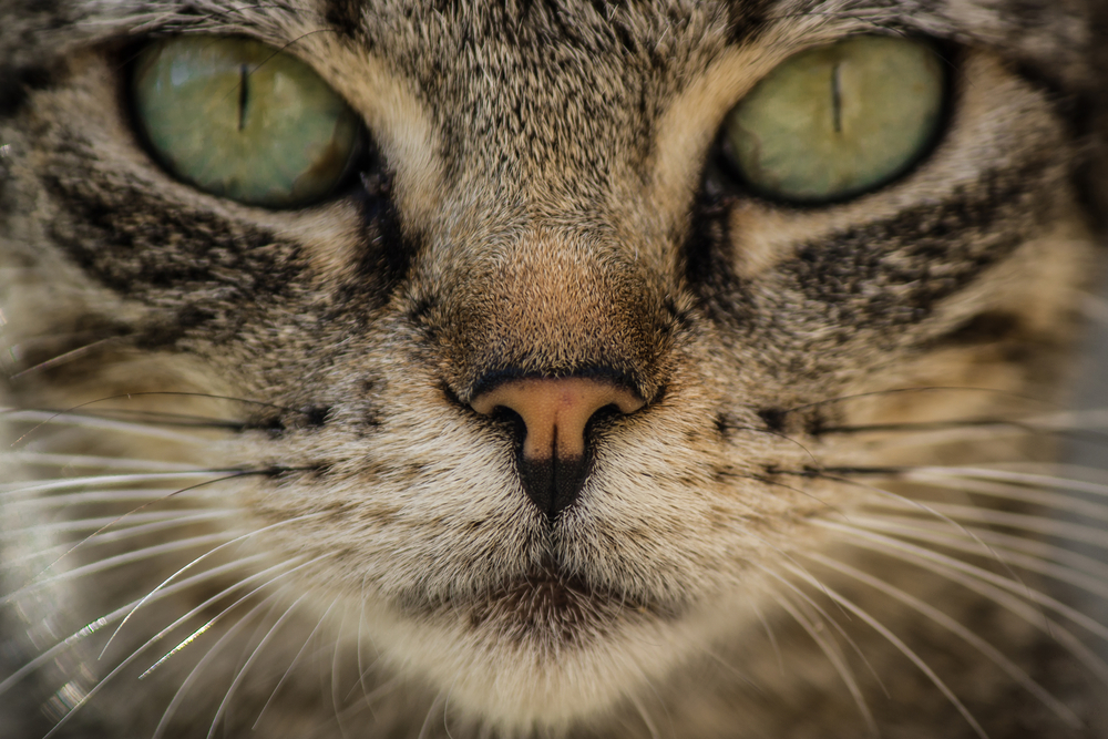 This cat expert just explained everything that makes no sense about cats