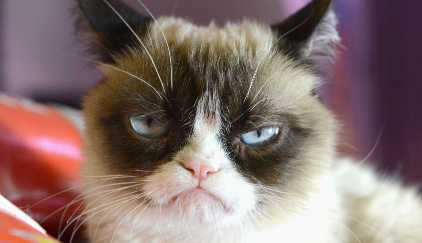 Uh-oh. Grumpy Cat is involved in a lawsuit.