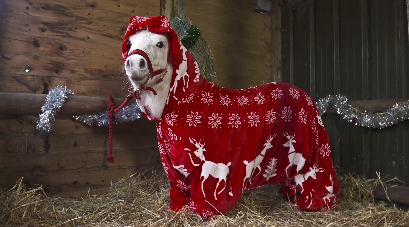 All we want for Christmas is this tiny Shetland pony in a onesie