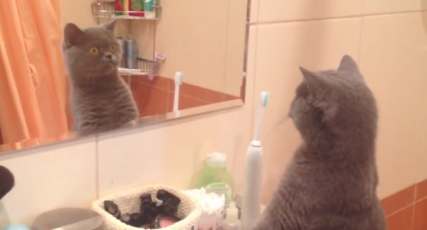 This adooorable cat can't stop looking at just how handsome he is in the mirror