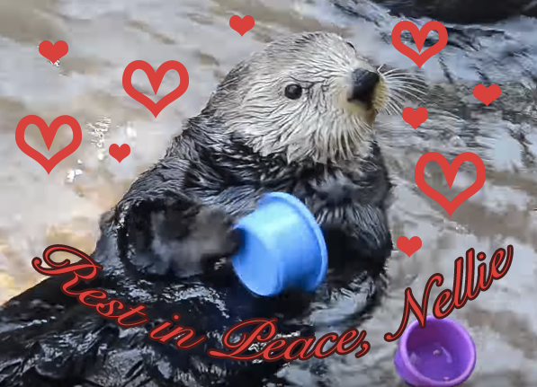 RIP Nellie the Otter, our favorite cup-stacking animal