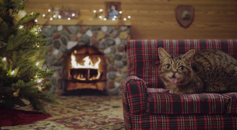 Lil BUB's new holiday video is wonderfully strange and mesmerizing