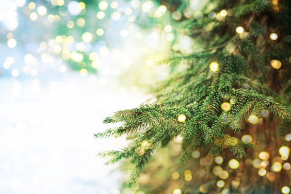 The amazing, earth-friendly way you can recycle your Christmas tree