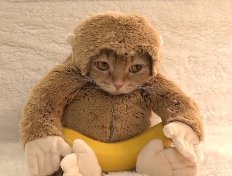 Monkey cat is the pet we all desperately want