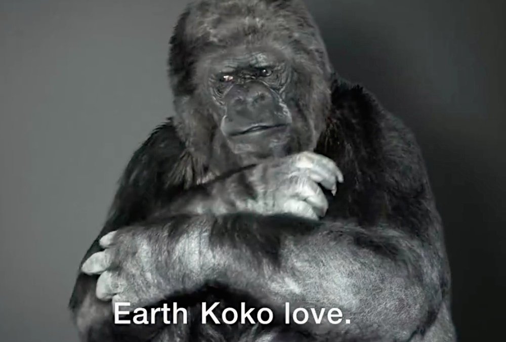 Koko the Gorilla has an important sign language message about protecting the environment