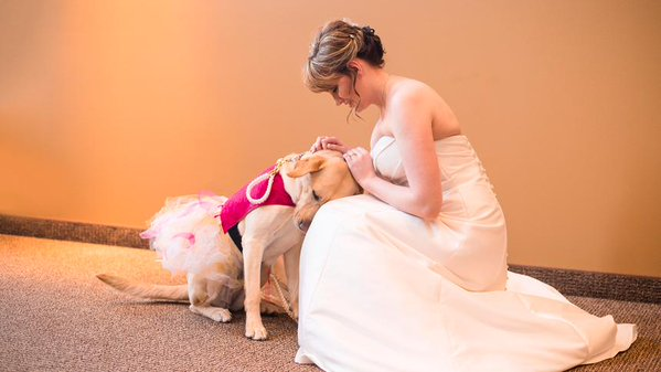 Why this picture of a bride and her service dog has gone viral