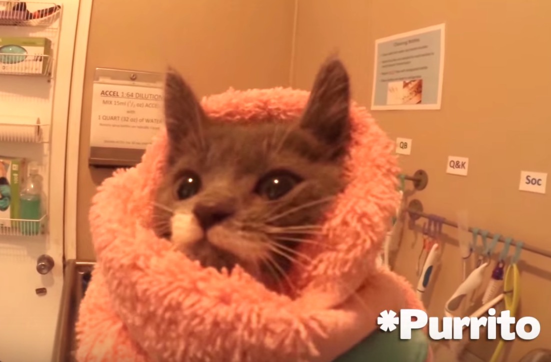This beyond adorable video follows kittens for 24 hours at a nursery, so see us never