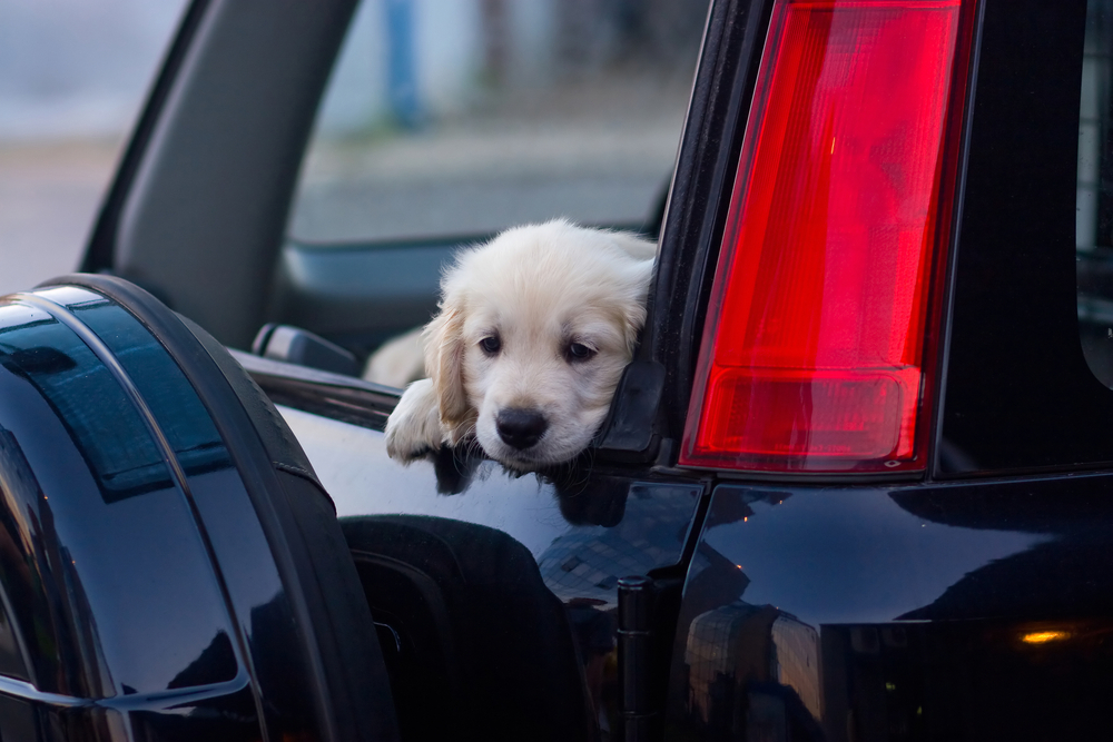 Next week, Uber's going to deliver you some puppies