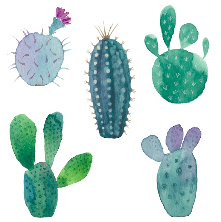 How raising cacti helped me grow