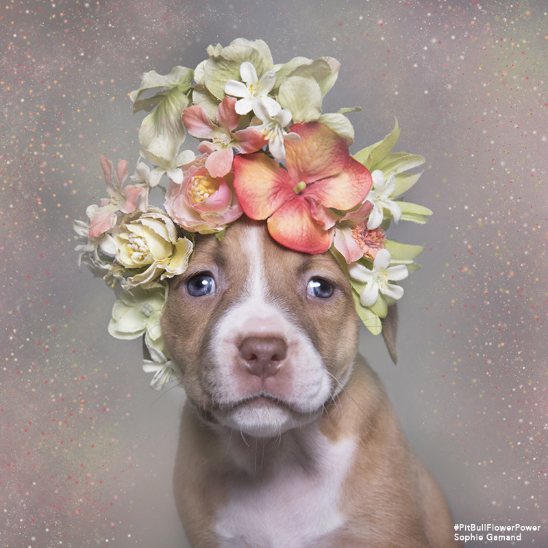 """Pit Bull Flower Power,"" the animal adoption project that's stolen our hearts"