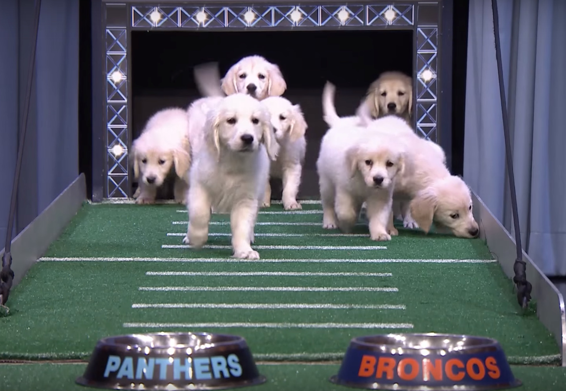 These adorable puppies just predicted which team will win the Super Bowl