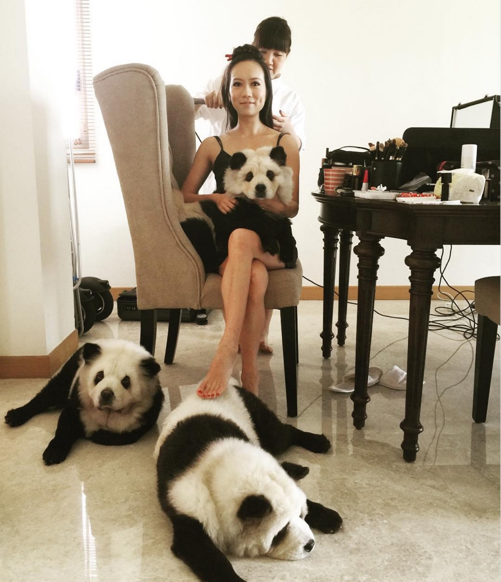 What happened when one woman dyed her dogs to look like panda bears