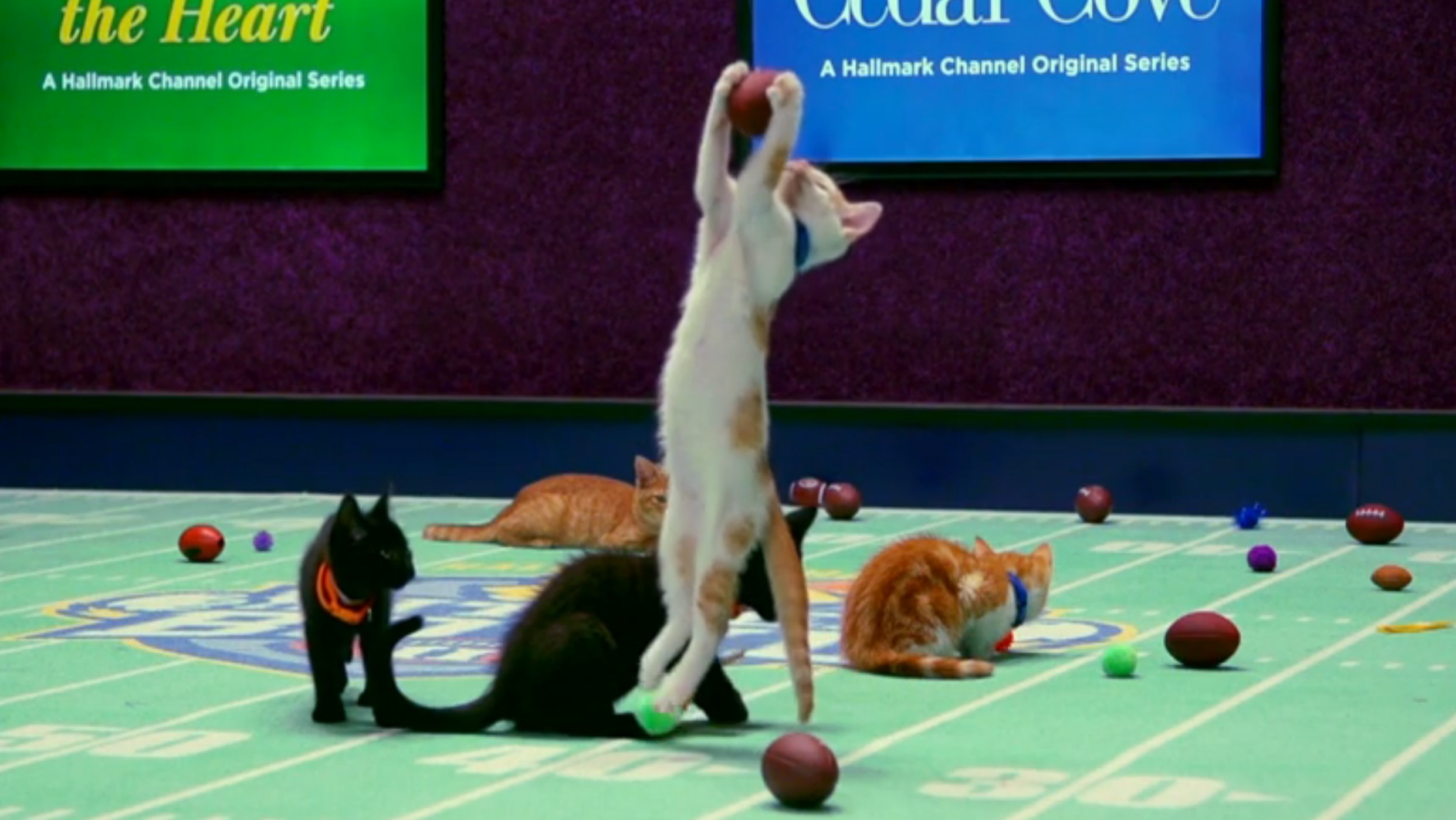 Let's drop everything and all talk about the Kitten Bowl