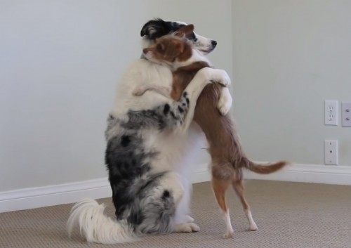 This video where dogs teach us how to hug is the best thing we've ever seen